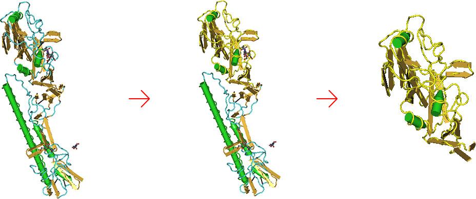 Поведено моделирование структуры гемагглютинина вируса Гриппа, удален трансмембранный домен