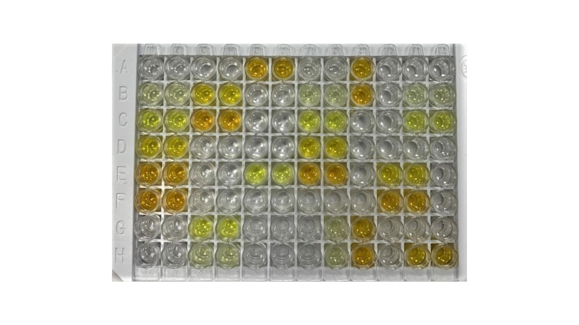 Антиген: SARS-CoV2 N белок нуклеокапсида.   Иммобилизация антигена: 1 мкг/мл, 50 мМ карбонатный буфер, pH 9,6.   Образцы:   отрицательные, N = 1000 (пул 2016 года), положительные (N = 2000).   Диагностическая специфичность 99+%, диагностическая чувствительность 99+%.