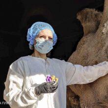 В рамках проекта получения VHH антител началась иммунизация верблюда